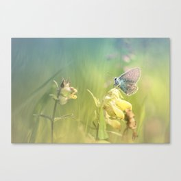 Dreamy serenity Canvas Print