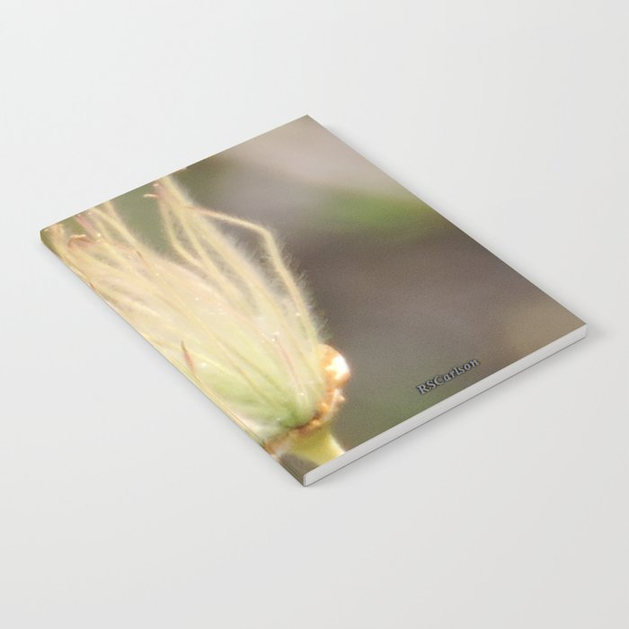 Apache Plume Notebook