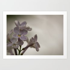 Lilac Morning Art Print