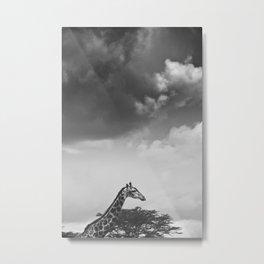 Giraffe under overcast Metal Print