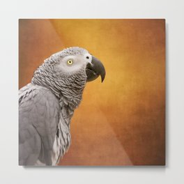 African grey parrot Metal Print