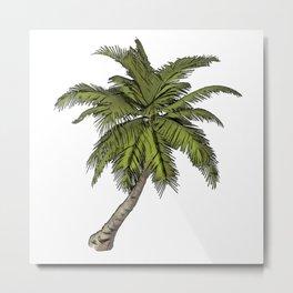 Palm Arecaceae botanical perennial monocot Arecales climbers stemless Metal Print