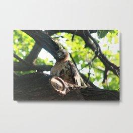 RedTail Hawk (1) Metal Print
