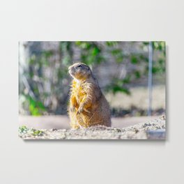 The Good Gopher Metal Print