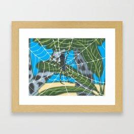Señior araña Framed Art Print