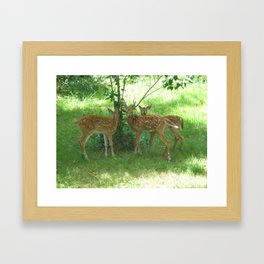 Younglings Framed Art Print