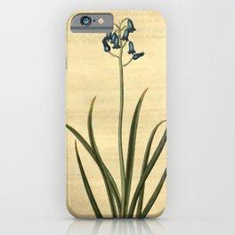 Flower 2425 hyacinthus amethystinus Amethyst coloured Hyacinth10 iPhone Case