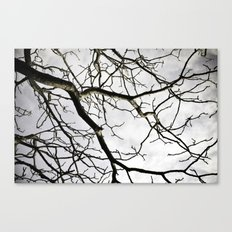 Branch Out Canvas Print