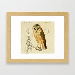 Naturalist Barn Owl Framed Art Print
