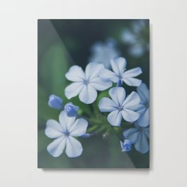 Blue Flowers 1701 - Nature Photography Metal Print