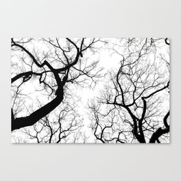 Black and white tree top silhouettes... Canvas Print