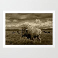 American Buffalo Bison in the Grand Teton National Park in Sepia Tone Art Print