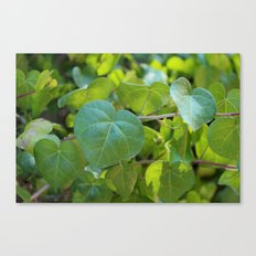 leaf. Canvas Print