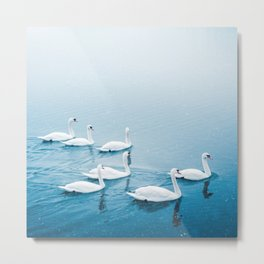 White swans in the lake, peaceful nature animals photo Metal Print