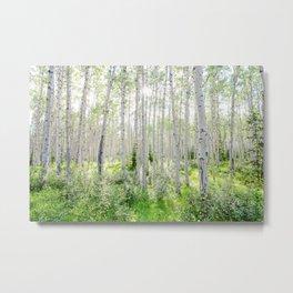 Poplar Grove Metal Print