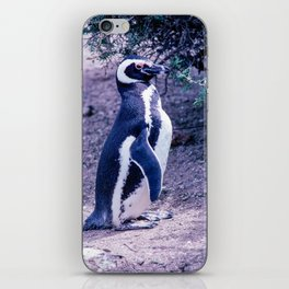 Penguin in Peninsula Valdes iPhone Skin