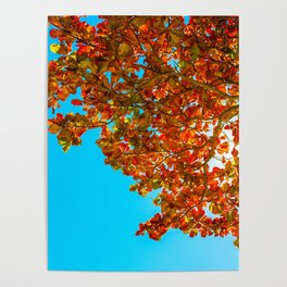 Red Leaves in Blue Poster
