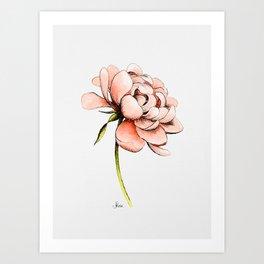 Coral Pink Peony Art Print