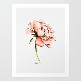 Coral Pink Peony Art Print
