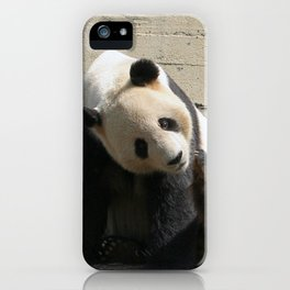 Panda_20170507_by_JAMFoto iPhone Case