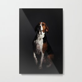 Greater Swiss Mountain Dog Metal Print