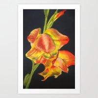 Gladiolus Against Black Art Print