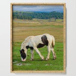 Gypsy Vanner Filly 5506 - Colorado Serving Tray