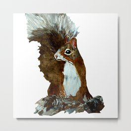 Woodland Red Squirrel  Metal Print