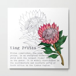 King Protea Metal Print