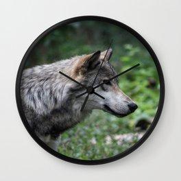 Grey Wolf Stare Wall Clock