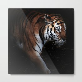 Tiger in search of Metal Print
