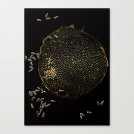 Full Moon Sunflower Canvas Print