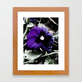 Purple Petunia Framed Art Print