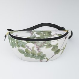 Double White Burnet Rose also known as Pimple Rose with White Flowers (Rosa Pimpinellifolia Alba Flo Fanny Pack