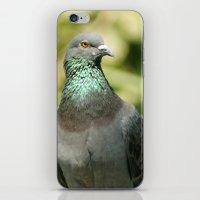 pigeon iPhone & iPod Skins featuring Pigeon by Vishal Wadhwani