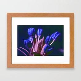 BLUE TULIPS Framed Art Print