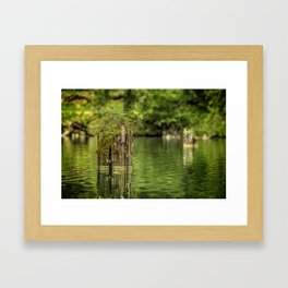 Lonely pine sprout on an old tree trunk in a lake Framed Art Print