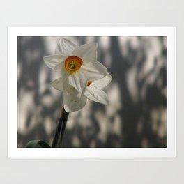 Flower in the Shadows Art Print