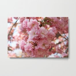 Cherry Blossom I Metal Print