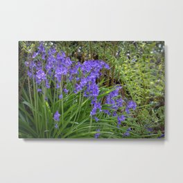 Scottish Blue Bells Metal Print