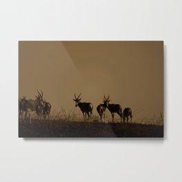 Blesbok Metal Print