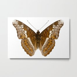 Admiral limenites butterfly Metal Print