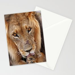 The lion - Africa wildlife Stationery Cards