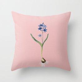Vintage Alpine Squill Botanical Illustration on Pink Throw Pillow