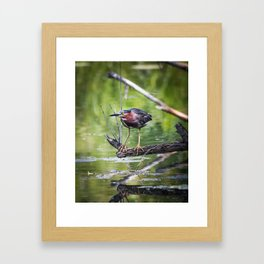 Green Heron in the channel Framed Art Print