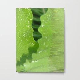 dew drops. Metal Print