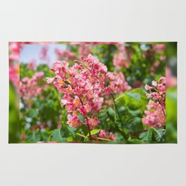 Aesculus red blossom cluster Rug