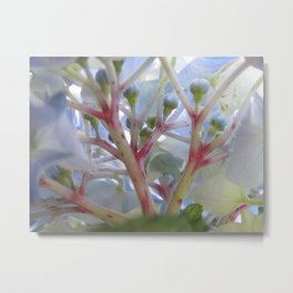 Hydrangeas from Underneath Metal Print