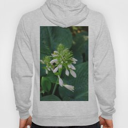 Shallow Illusions Hoody