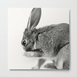Rabbit Animal Photography Metal Print